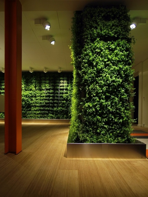 Green Walls in Your House_image