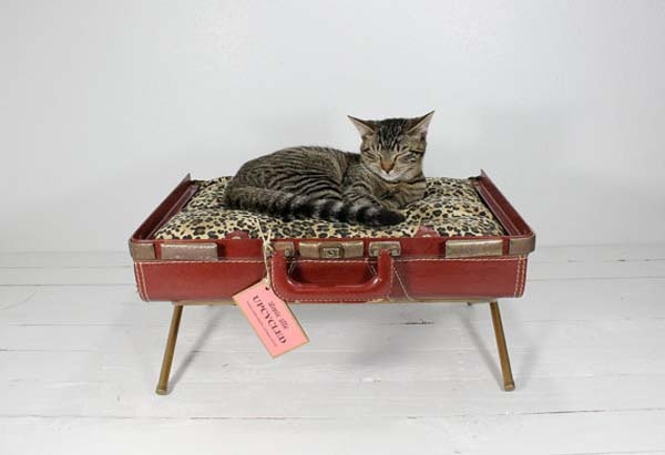 Fancy Suitcases for Cats and Dogs_image