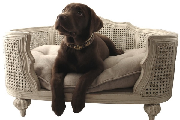 Beds For Your Pets_image
